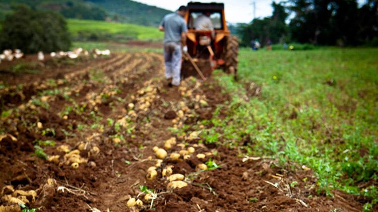 Curso Online de Agricultura Ecológica: Fertilización de Suelos y Cultivos