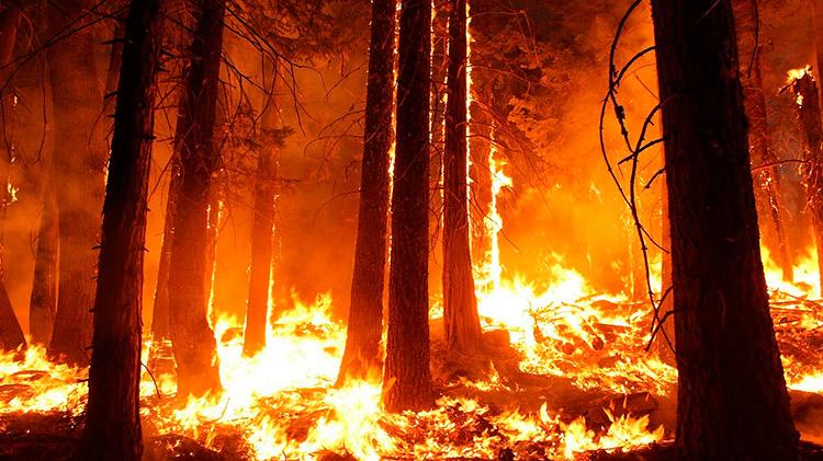 BonusCursos.com  bonuscursos.com BonusCursos.com prevencion incendios forestales 1