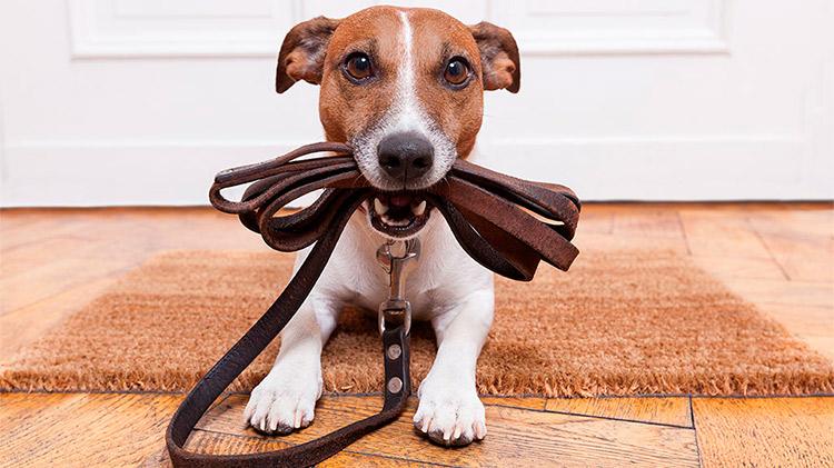 cuidados del perro Cuidados del Perro cuidados perro
