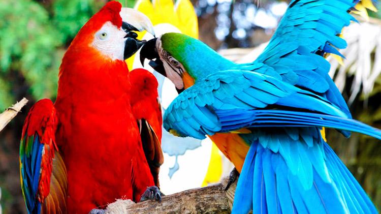 Cuidado de las Aves de Compañía  cuidado de las aves de compañía Cuidado de las Aves de Compañía aves compania