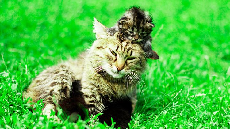 Curso Online de Cuidados del Gato