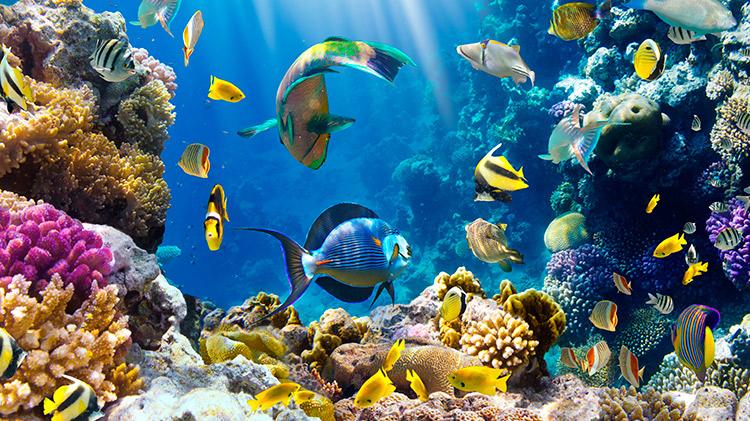 Curso online de cuidados de peces y acuarios for Cuidado de peces