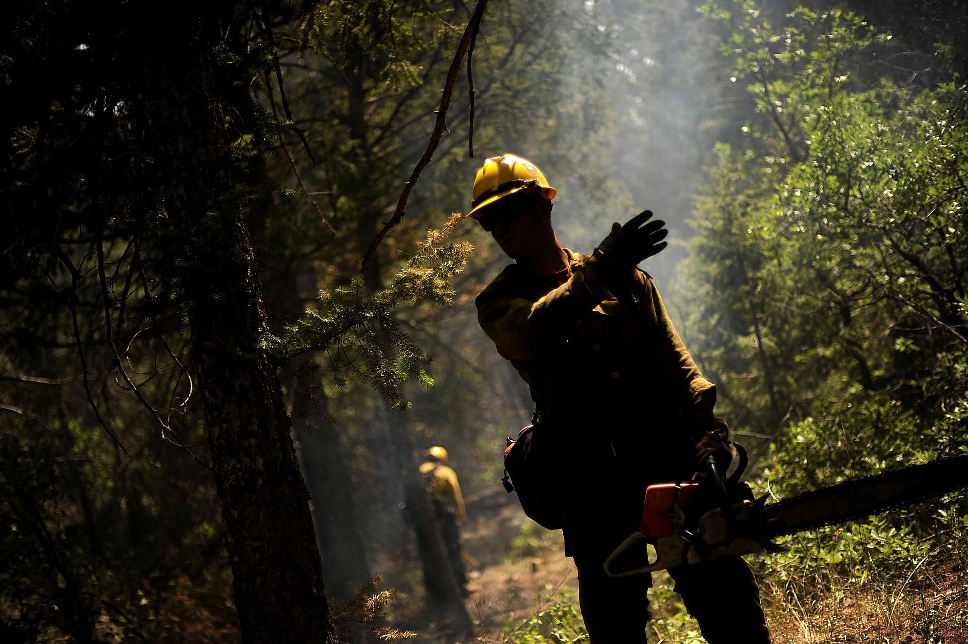 Prevención de incendios forestales   Prevención de incendios forestales ForestalMotosierra