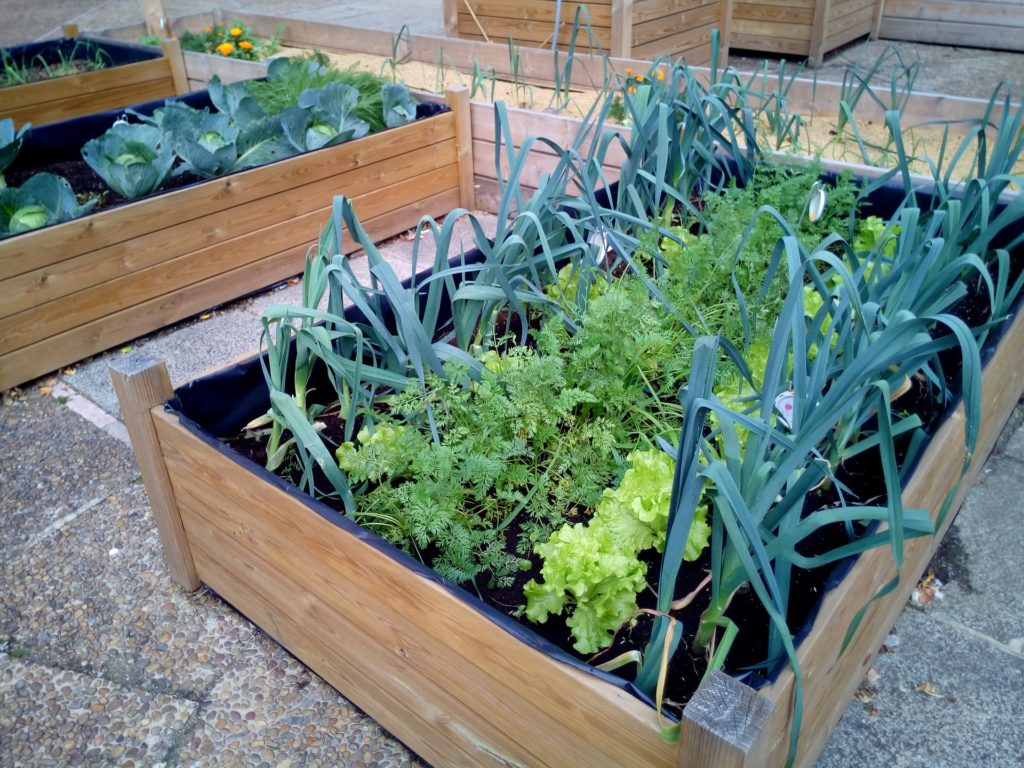 Cómo cultivar un huerto urbano   Cómo cultivar un huerto urbano CultivoMaceta 1024x768