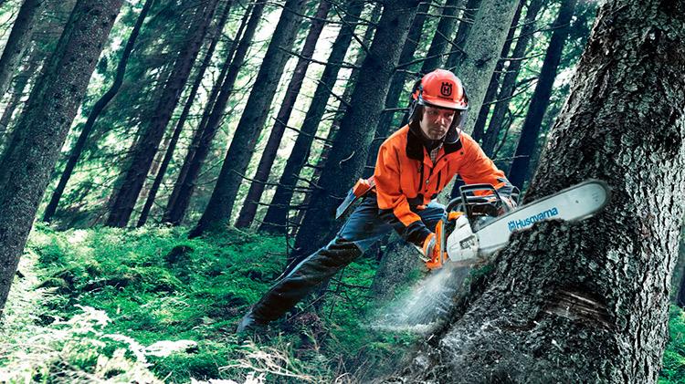 Curso Online de Prevención de Riesgos Laborales para el Sector Forestal