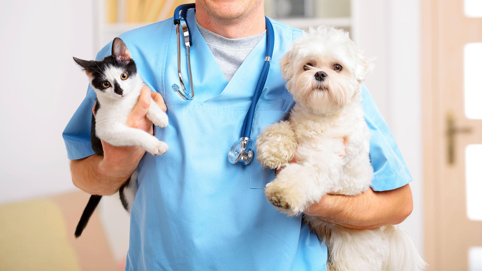 Los mejores cursos de veterinaria los mejores cursos de veterinaria Los mejores cursos de veterinaria Los mejores cursos de veterinaria