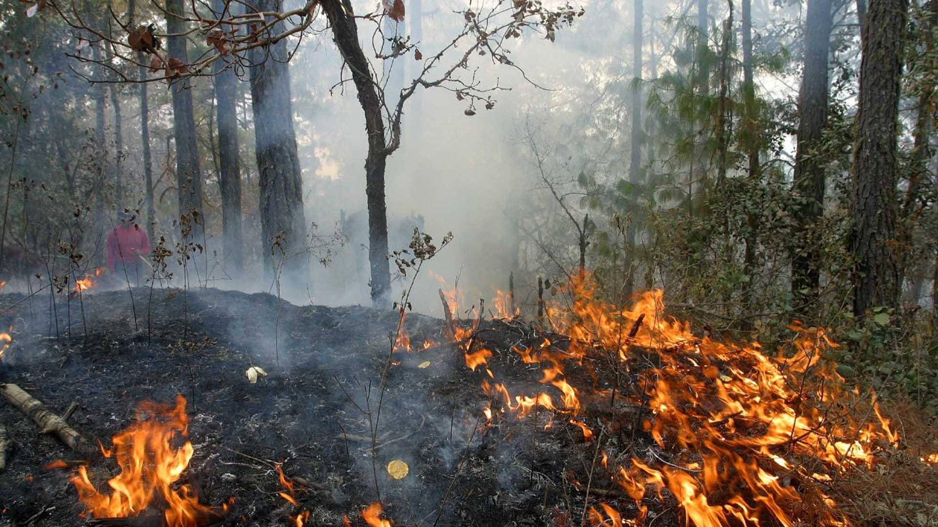 prevención de incendios forestales Prevención de incendios forestales prevencion incendios forestales